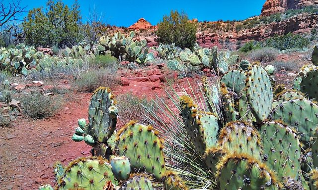 Cactus at the start of the trail