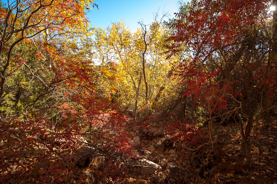 More Fall Colors along Cherry Creek Road - by Jabon Eagar