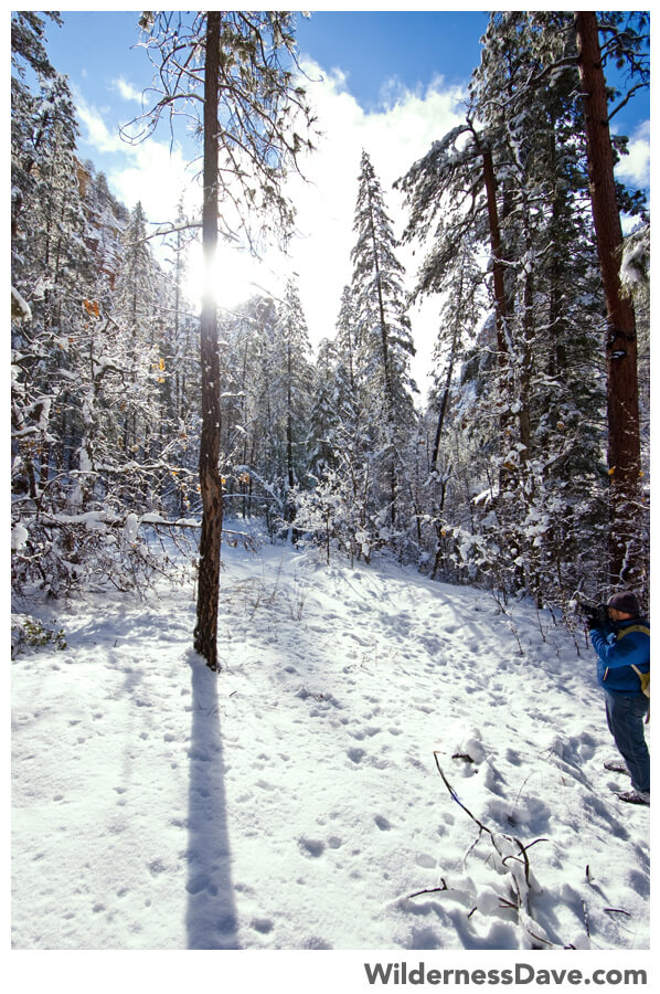light through the snow covered trees at West Fork Oak Creek
