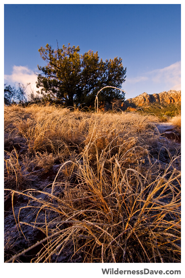 Sunrise light on the frozen grasses at Bell Rock