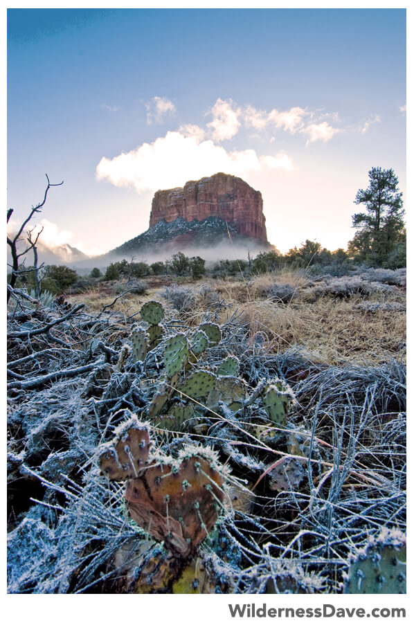 Frost on the prickly pear at Bell Rock, Sedona
