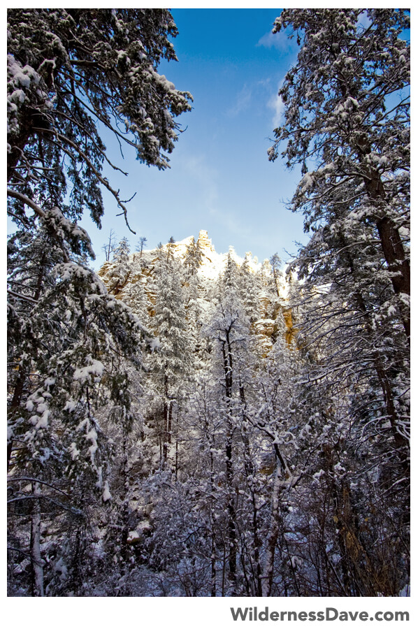 Sedona Snow framed in pines in West Fork Oak Creek Canyon