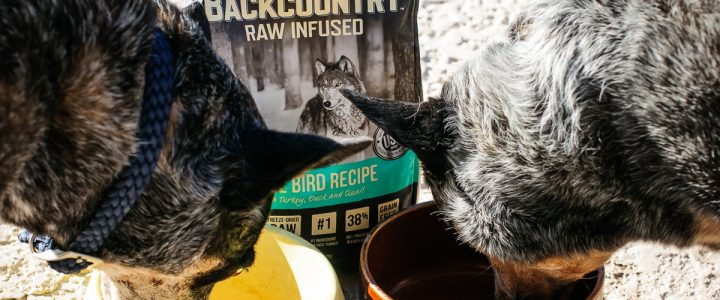 Merrick Backcountry | Fuel for Your Adventurous Dogs