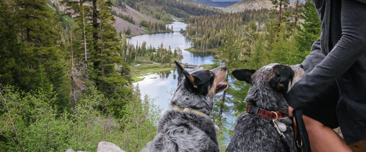 Ultimate Summer Dog Adventures
