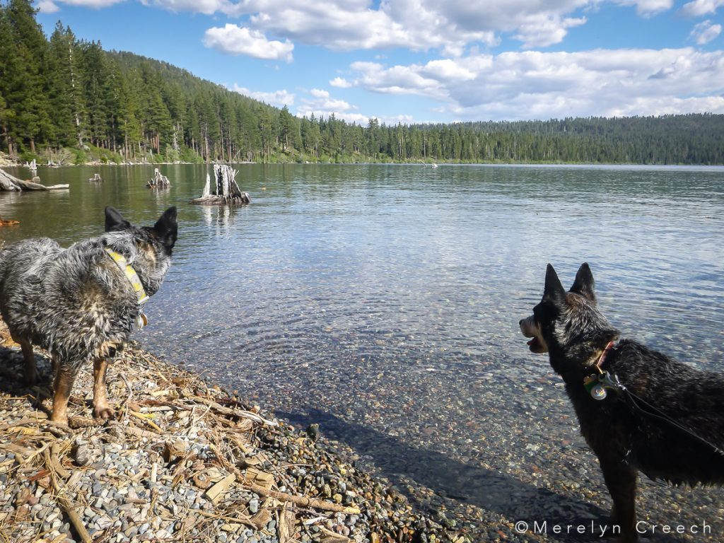 focused on sticks at Fallen Leaf Lake